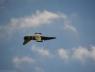 baltic-bees-lotwa-albatros39-na-airshow-2013-radom-10