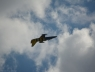 baltic-bees-lotwa-albatros39-na-airshow-2013-radom-17