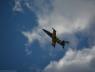 baltic-bees-lotwa-albatros39-na-airshow-2013-radom-23