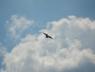 mig29-mig-29-pokazy-airshow-2013-radom-6