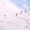 Blok Aeroklubu